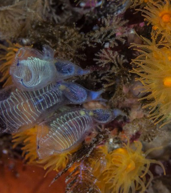 Marine Discover Days