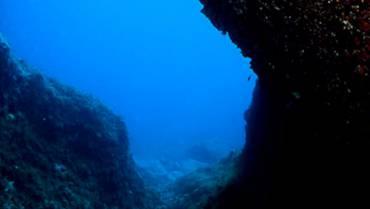 Gorgonie Dive