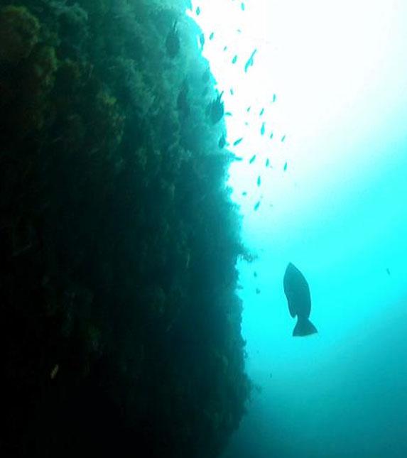 The faro cliff dive