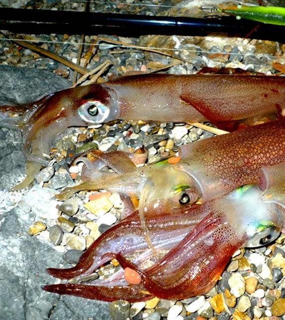 Pesca ai Cefalopodi
